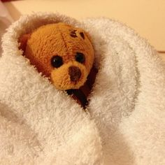 Berlin Bear is ready for the spa at Hotel Terme Roseo! - Instagram by @Kate McCulley