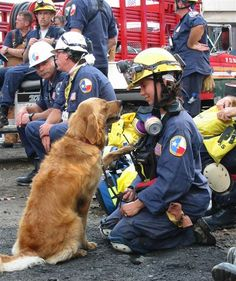 Last known 9/11 Ground Zero search dog still lends helping paw - Pets - TODAY.com-- Her name is Bretagne, 15 years old; a golden retriever... Bravo, Bretagne! <3