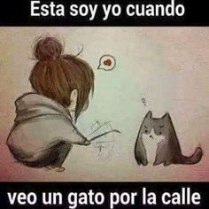 Esta soy yo cuando veo un gato por la calle.