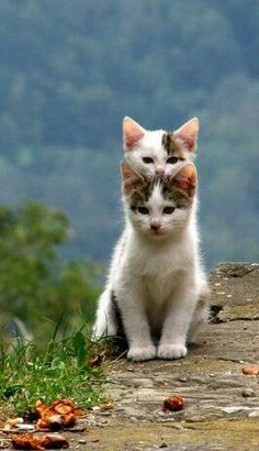 Two cute kittens in Italy.
