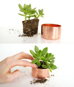 Poppytalk: DIY Mini Copper Planters:  Make from copper pipe cap fittings (choose your own size). To get most of the tarnish off of the copper in the simplest way possible, lather the outsides of them with ketchup. Yes, you read correctly. The vinegar in ketchup has just enough acidic properties to give the copper a good cleaning. Let it sit for about a half an hour, then rinse. It's surprising what a difference it makes. All that's left now is planting, and voila!