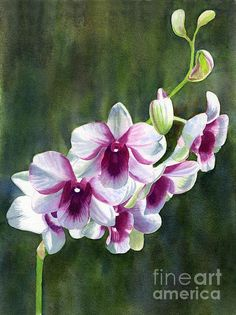 """""""White And Red Violet Orchid"""" by Sharon Freeman"""