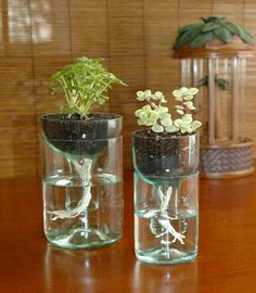 How to recycle plastic bottles into a self watering planter.