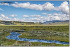 Lamar Valley  Green Grass Bison and Clouds  not a bad day  #Landscape #LandscapePhotography #Nature #NaturePhotography #Lamar #Yellowstone #LamarValley
