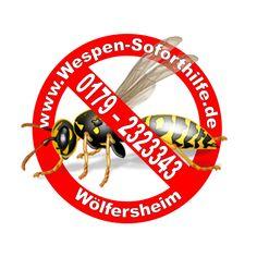Entfernung von Wespen, Hummeln, Hornissen in der Wetterau. Wasp, Bumble Bees, Distance, First Aid