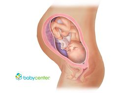 What your baby looks like at 35 weeks @babycenter
