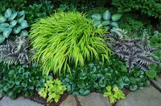 An assortment of my shade favorites: Hakonechloa, painted ferns, European ginger, chartreuse heuchera. And some sharp hostas to boot.