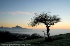 The holy thorn at Glastonbury on a May morning