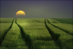 twilight moon over fields
