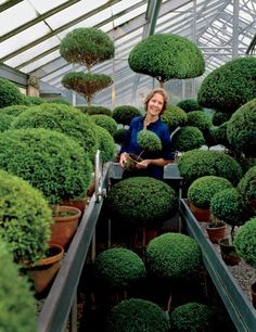 """Garden designer, stylesetter, and philanthropist Rachel """"Bunny"""" Mellon in the 1980s, at Oak Spring, her Virginia farm; she stands amid the herb topiaries she popularized (shown here are common myrtles). For details see June Sources."""