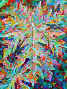 """Sunrise Solo"", a Papaya leaf"