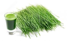Barley Grass Has Highest Levels of Important Cancer-Killing Enzyme