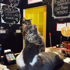 Café Chat l'Heureux in Montréal, QC