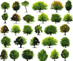 30 Trees Vector Graphics Set