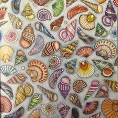 Colouring...seashells