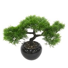 Bloomsbury Market Bonsai Tree Plant Size: H x W x D, Base Color: Black