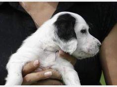 . Baa Baa Black Sheep, White Cottage, White Farmhouse, Dog Rules, English Setter, Border Collie, Country Girls, Puppy Love, Fur Babies