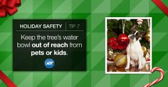 Protect your furry friends! Keep a close eye on them around the #holiday tree. #PetSafety #HolidaySafety #ADT