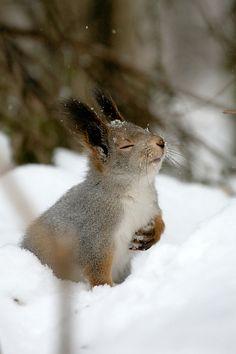 Écureuil qui hume la neige