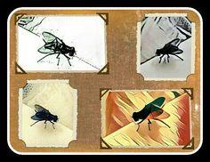 Mei Mugg Meine Fliege My Fly als Kunstobjekt. Vom #foto mit #prisma verschiedenst bearbeitet und anschließend mit #picsart eine #collage erstellt. Meine Fliege wird noch berühmt werden. #instacolor #instapic #instaphoto #instapicture #artoftheday #artwork #workart #picoftheday #artoftheday #painting #flyflap #animalpic #beautyful #insekt #insect #modernstyle #stuttgart #schwäbischgmünd #germany #deutschland #mugg #artist #painter #streetart