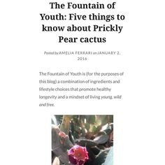 First post of 2016 up on the blog! Check out some quick facts on the prickly pear cactus, one of many ingredients to the Fountain of Youth. #NewYearsResolution #PricklyPear #Cactus #FountainofYouth #Live #YoungWildFree #blogger #FF #Blog #Apothecary #TobiApothecary #TIUTeam #LeanCleanGreen #MyHerbalStudies #MyWildLife #Superfood