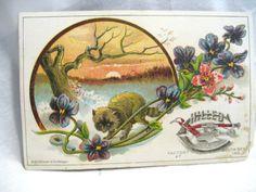 #Vintage #TradeCard #Advertising #Postcard by tenanthousevintage, $10.00 #paperephemera #raccoon