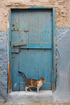 One of the blue doors and many cats in Medina - photo by Brian Greenbaum