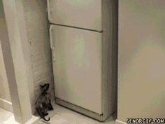 cat opens freezer