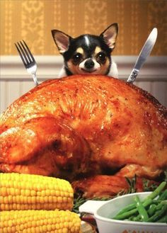 Little-Dog-Behind-Big-Turkey-Funny-Chihuahua-Thanksgiving-Card-by-Avanti-Press #Chihuahua