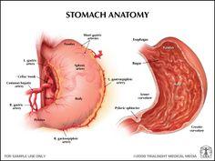 Stomach Anatomy | stomach+anatomy.jpg