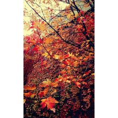 """""""Autumn is a second spring when every leaf is a flower. School Photography, Autumn, Fall, Leaves, Abstract, Spring, Artwork, Flowers, Instagram"""