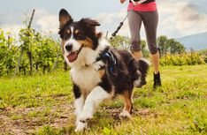 The Best Types of Dogs for Runners