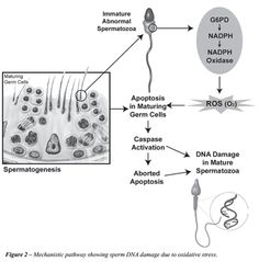 modern surgery: Role of sperm chromatin abnormalities and DNA dama...
