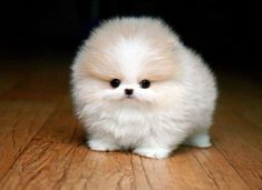 35 Baby Animals That Squeeze Massive Amounts Of Cute Into Tiny Bodies - brainjet.com