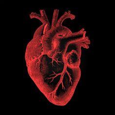 Kostenloses Stockfoto von Human Heart - Anatomical Rendering on Dark Background - Herz Heart Anatomy, Anatomy Art, Human Anatomy, Anatomical Heart Drawing, Human Heart Drawing, Medical Wallpaper, See Tattoo, Heart Background, Stock Background