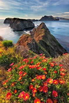 Though the Ice Plant is a beautiful addition to the island, it is considered an invasive species and is scheduled to be eradicated from the island by Inspiration Point, Anacapa Island, Channel Islands National Park, California by Jim Shoemaker Oh The Places You'll Go, Places To Travel, Beautiful World, Beautiful Places, Landscape Photography, Nature Photography, Channel Islands National Park, Channel Islands California, Parcs