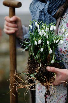 "peonyandbee: "" splendiferoushoney: from Landlust Catalogue "" Country Life, Country Living, Country Charm, Rustic Charm, Dream Garden, Farm Life, Garden Inspiration, Gardening Tips, Organic Gardening"