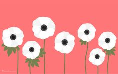 Vector Anemones Graphics Get ready for spring! Add delicate white anemones to all your spring projects. Vector files are laye by Sarah Hearts Pink Wallpaper Backgrounds, 2017 Wallpaper, Computer Wallpaper, Wallpapers, Monster Illustration, Pencil Illustration, Graphic Illustration, Illustrations, Microsoft Wallpaper