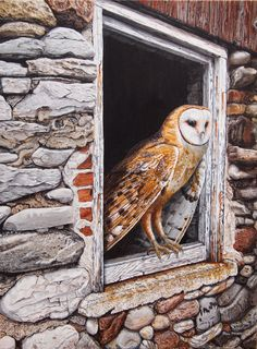 Canadian Wildlife Artist featuring original works of art and prints Original Artwork, Original Paintings, Canadian Wildlife, Wildlife Art, Art For Sale, Lion Sculpture, Owl, Barn, Statue