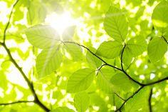 Lumière du soleil dans les feuilles d'un arbre