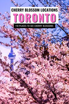 Looking for cherry blossoms in Ontario? Here are 10 Awesome Places to Find Cherry Blossoms in Toronto. I cherry blossom trees I things to do in Toronto I spring in Toronto I Toronto cherry blossoms I where to go in Toronto I Toronto Ontario Canada I places in Toronto I places to go in Toronto I places to go in Ontario I Ontario cherry blossoms I Toronto in the spring I Ontario travel I spring travel I Toronto travel I Canada Travel I flowering trees in Toronto I #Toronto #cherryblossoms… Wanderlust Travel, Asia Travel, Travel Usa, Travel Abroad, Toronto Vacation, Toronto Travel, Travel Guides, Travel Tips, Travel Info