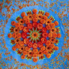 Gerbera daisy, tulip, rose, marigold #danmala