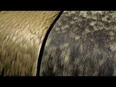 Xgen fur color variation with RenderMan - YouTube