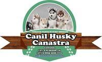 Canil-husky-canastra7