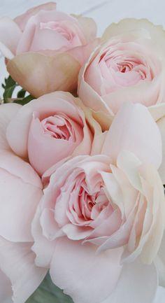誕生日のプレゼントにバラの花束
