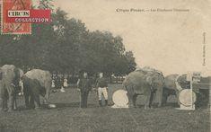 Circus collection: Cirque Pinder 1907