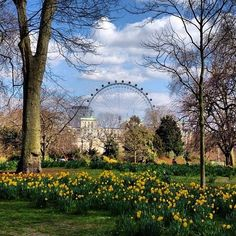 St James Park taken by @schnarf78 is our next favourite from our #igerslondoninthepark contest so far.  Have you taken a similar picture of St James Park or any of our lovely London parks? Keep tagging your old and new park images!