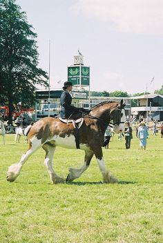 Side Saddle Clydesdale
