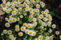 Mutterkraut Gardening, Greenery, Plants, Blog, Ideas, Potting Soil, Fruit Garden, Nature, Lawn And Garden