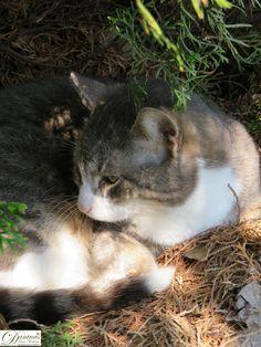 Katze Pauli genießt den Frühling im Garten, auf seinem Lieblingsplatz unter der Thuje. Der Kater hat sich ein Nest gemacht. Nest, Animaux, New Adventures, Oil Painting On Canvas, Cuddle, Flower Pictures, Pets, Nest Box